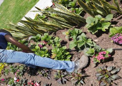 Riego jardines exterior