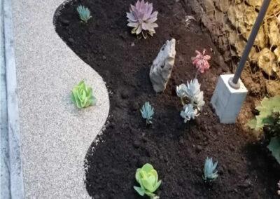 Jardines en suculentas